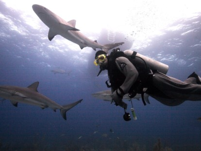 Scuba diving destinations