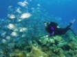 French Riviera: under water diving and the high life