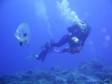SOUTH AFRICA: Beautiful and diverse diving