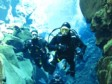 ICELAND: Unique diving experiences unlike nowhere else in the world