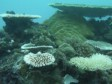 MICRONESIA: the wreck diving capital of the world