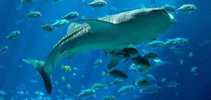 Easy dive booking - Scuba diving sharks